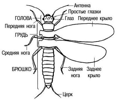 Схематическое изображение типичного