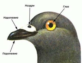 Класс птицы пернатые