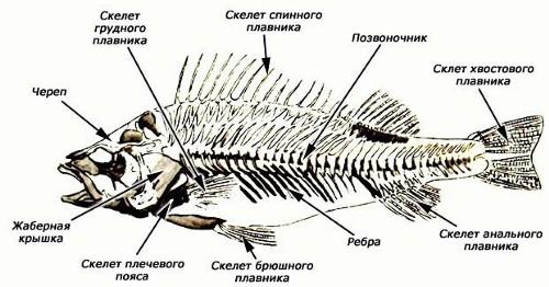 6.http://my-edu.ru/edu_bio/img